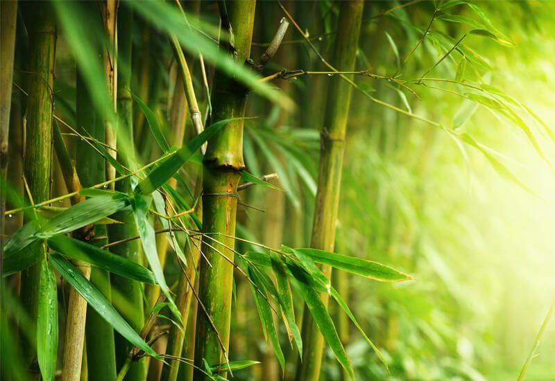 Idealna kombinacija bambusa i mikrovlakana za udobnost i toplotu u zimskim mesecima